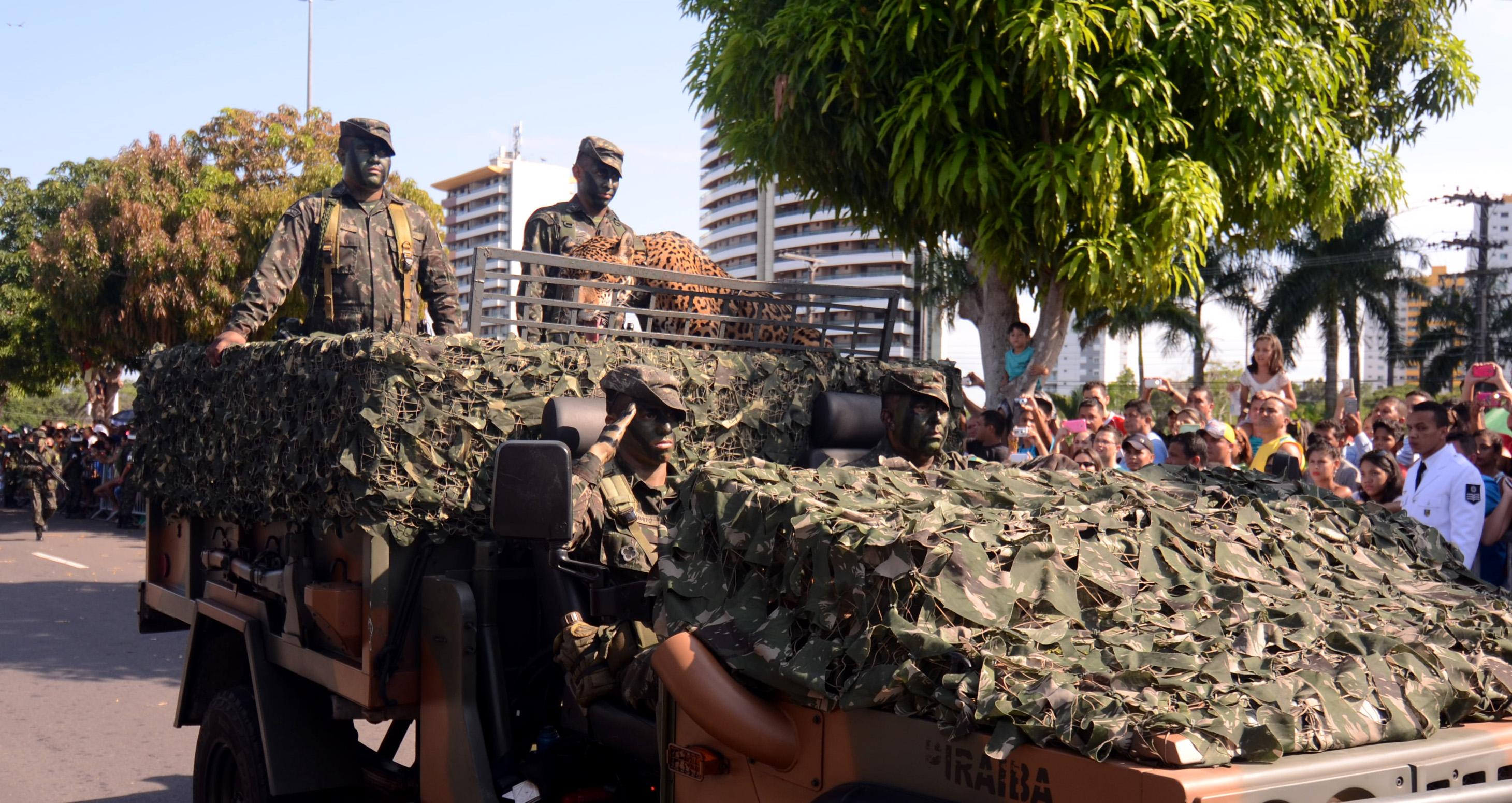 Efeito Juma: Justiça proíbe Exército Brasileiro de exibir onças no desfile de 7 de Setembro