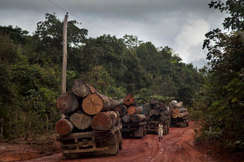 Caminhões carregados de madeira aguardam a travessia do rio Curuá-Una, próximo a Santarém, no oeste do Pará (Foto: Marizilda Cruppe/Greenpeace)