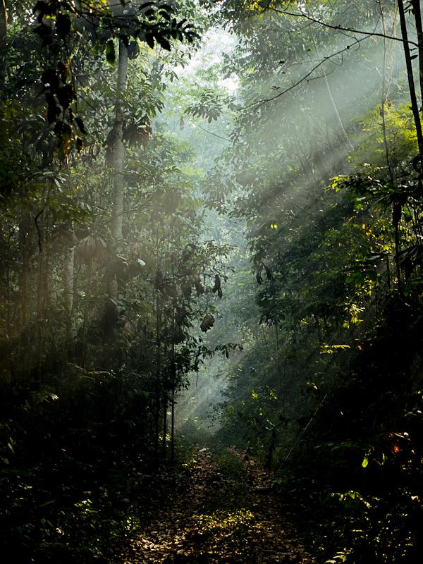 Incêndio florestal em Santarém, no oeste do Pará (Foto: Adam Ronan/ECOFOR)