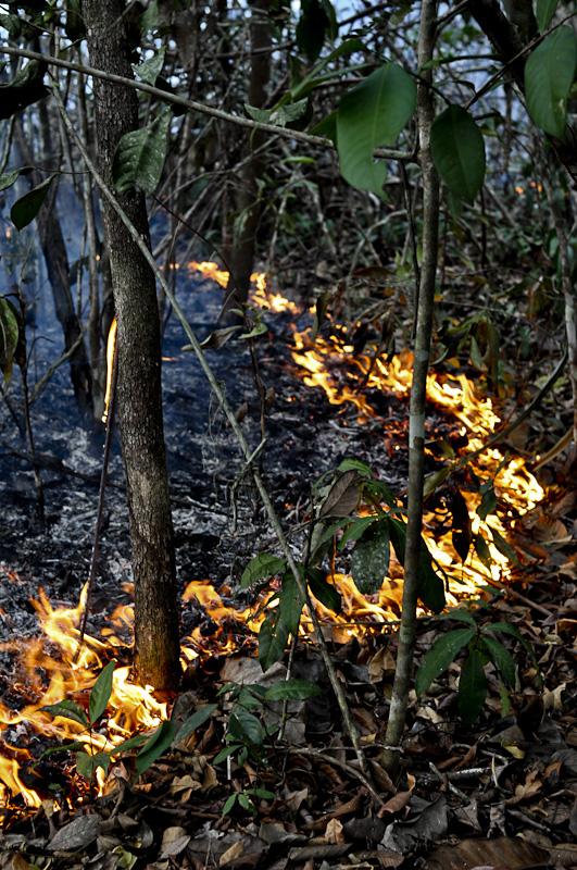 Queimada na floresta em Santarém, oeste do Pará (Foto: Jos Barlow/2015)
