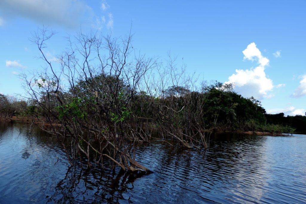 Vegetação, antes inundada, está morrendo (Foto: Cristiane Costa Carneiro)