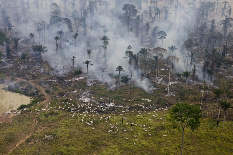 (Foto: Daniel Beltra/Greenpeace)