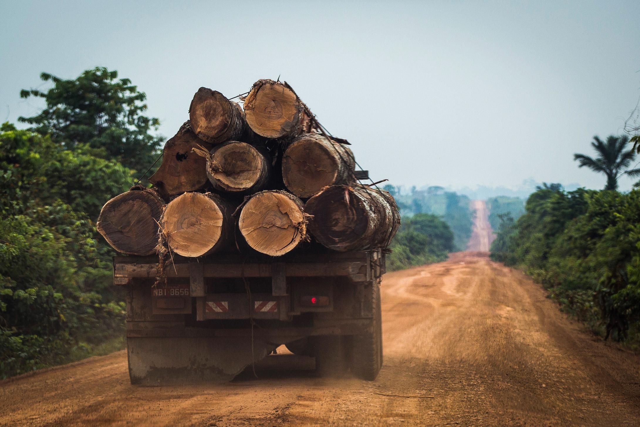 As árvores com maior valor comercial, como ipês e castanheiras, são exploradas (Foto: Bruno Kelly/Greenpeace)