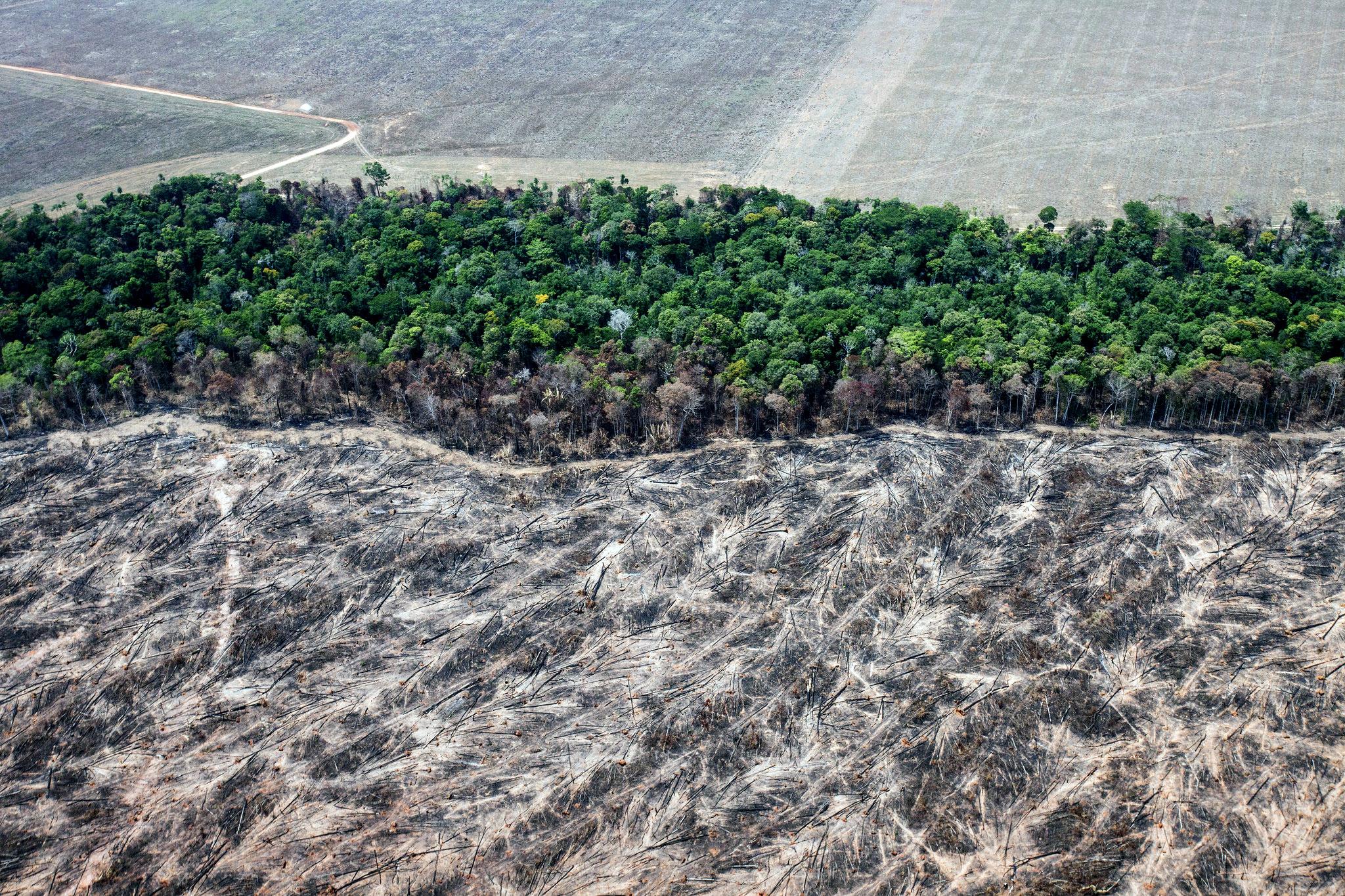 Área desmatada e queimada para a expansão agrícola, em Mato Grosso. (Foto: Paulo Pereira/Greenpeace)
