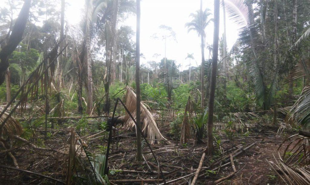 Área desmatada de TI Uru-Eu-Wau-Wau (Foto: Associação Kanindé)