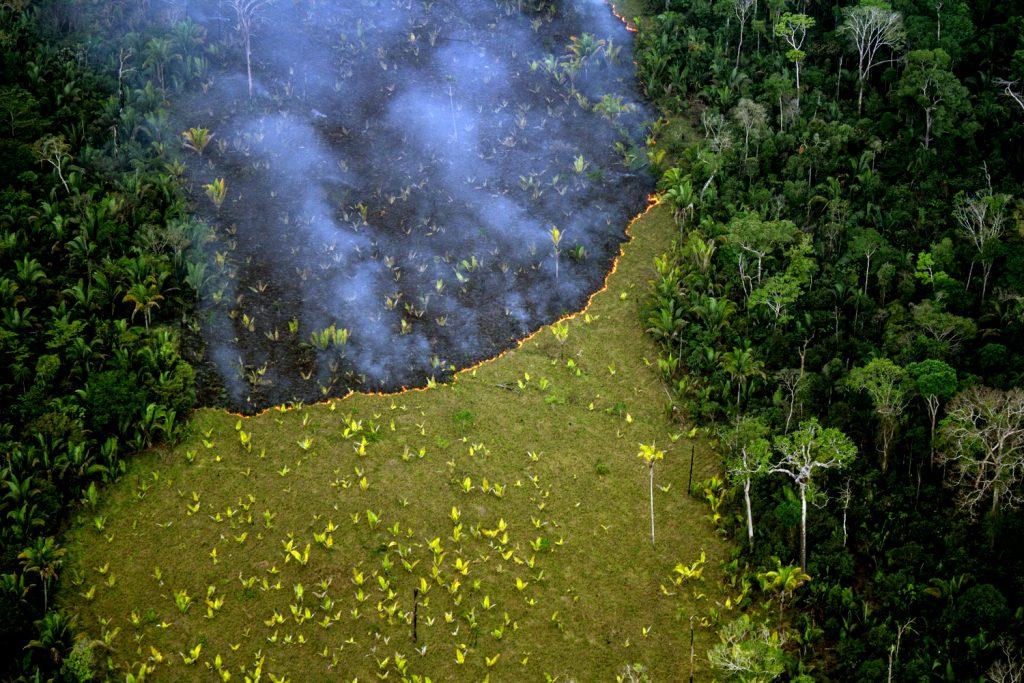 Invasores tocam fogo em área invadida dentro da TI Uru-Eu (Foto: Kanindé)