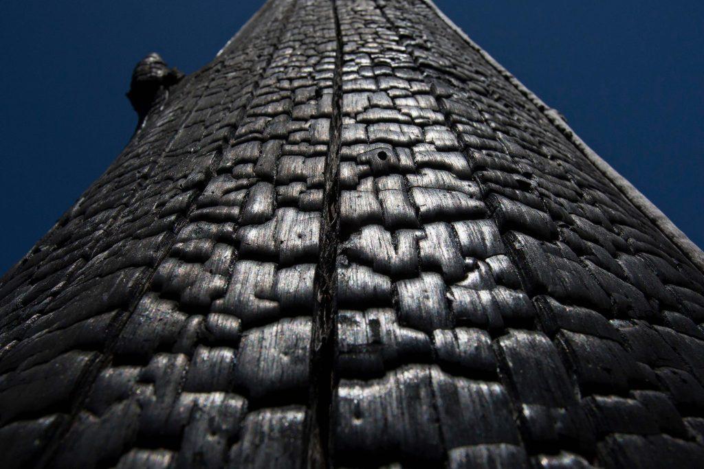 A morte da castanheira pelo fogo não vai calar a floresta (Foto: Paulo Santos/AcervoH)
