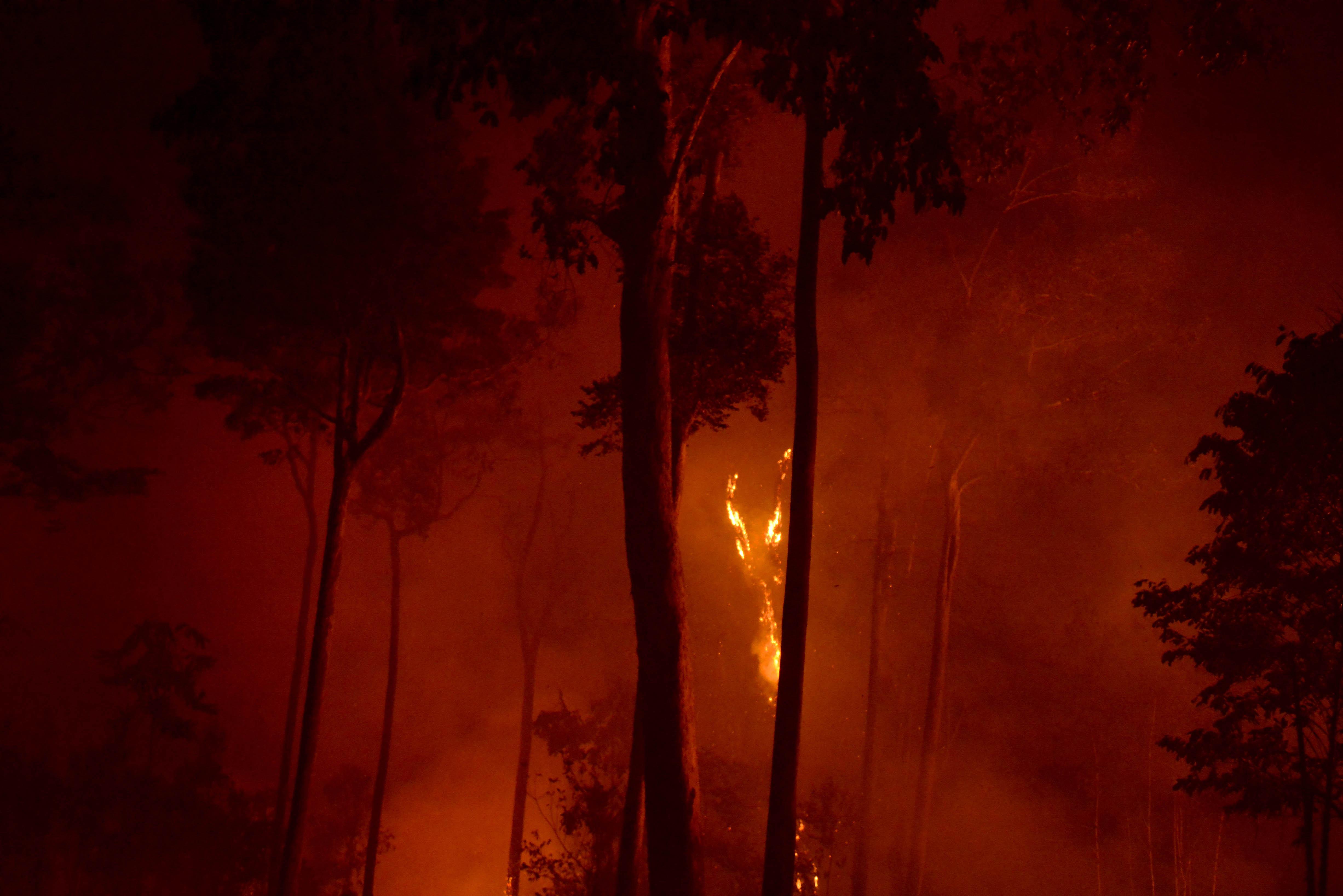 Exposição Amazônia I Os Extremos, imagens denunciam a destruição da floresta