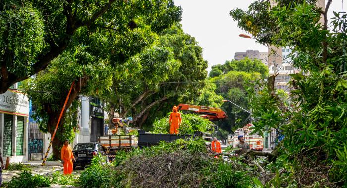 As mangueiras caem em Belém