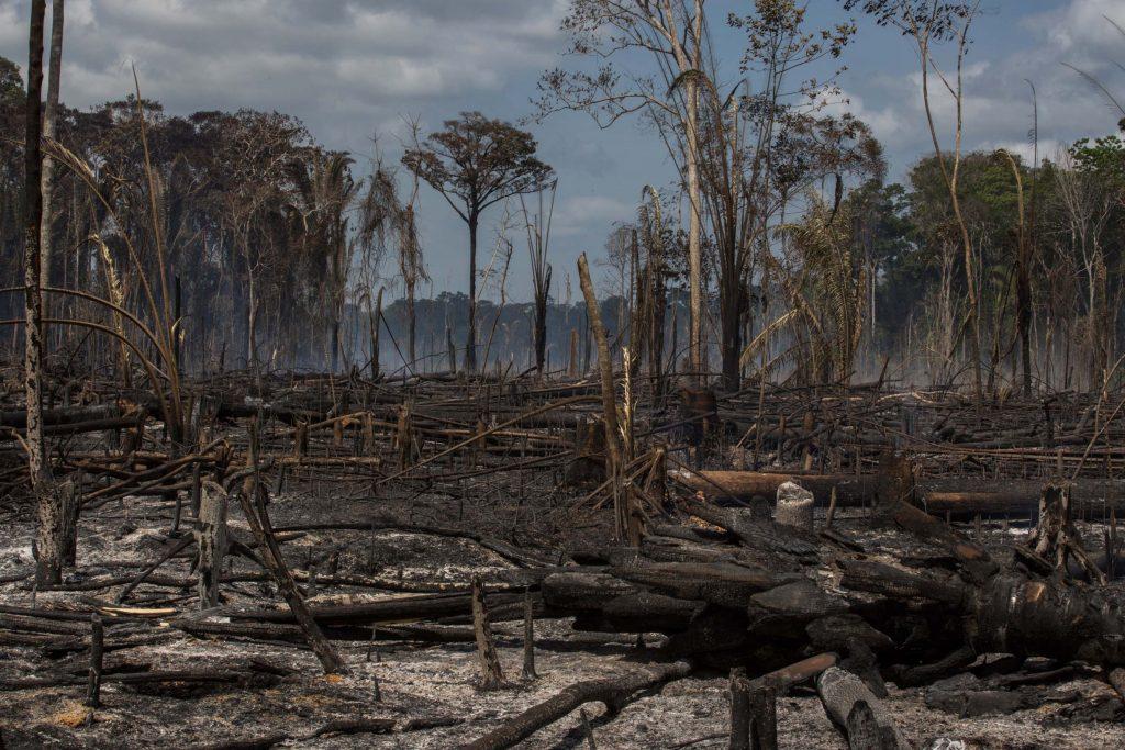 As chamas se alastram com facilidade, avançando sobre unidades de conservação como a Flona Tapajós (Foto Flavio Forner/InfoAmazônia)