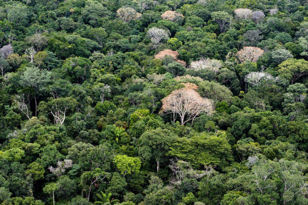 Parque Nacional do Acari, em Borba, sul do Amazonas (Foto: Daniel Beltrá|Greenpeace)
