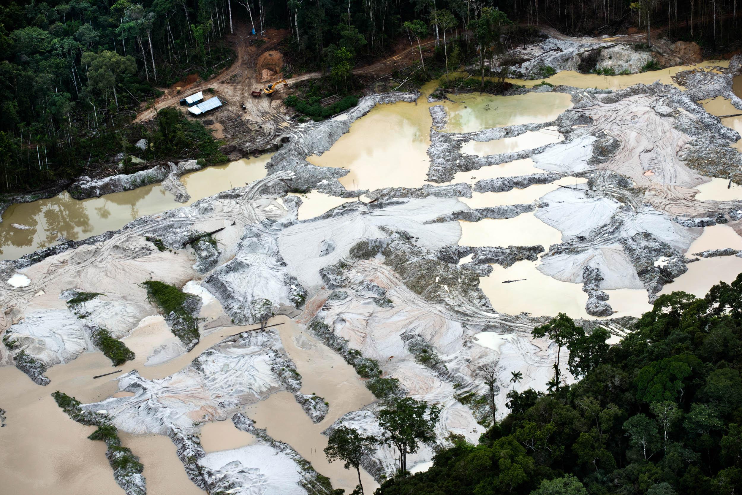 Sob o governo Temer, 80 mil km2 de florestas estão ameaçados de extinção no país