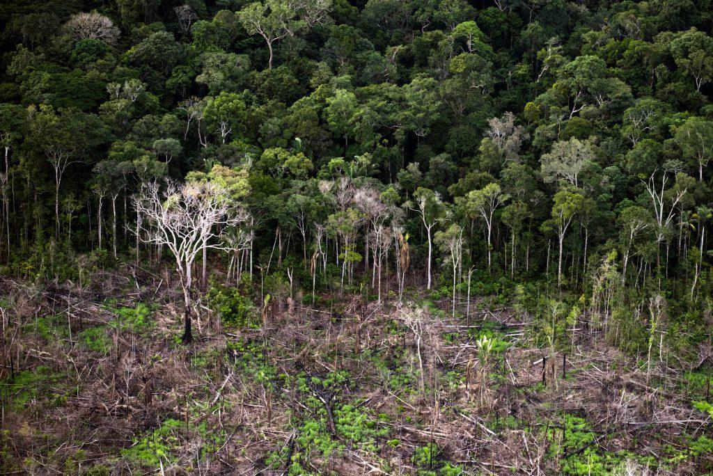 Desmatamento recente no distrito de Santo Antonio do Matupi, próximo à Floresta Nacional do Aripuanã (Foto Daniel Beltrá/Greenpeace)