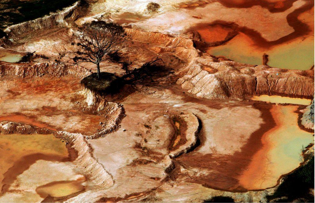Castaneira sobrevive em meio a devastação causada por olarias em Cacau Pirera, em Iranduba (Foto: Alberto César Araújo/2007)