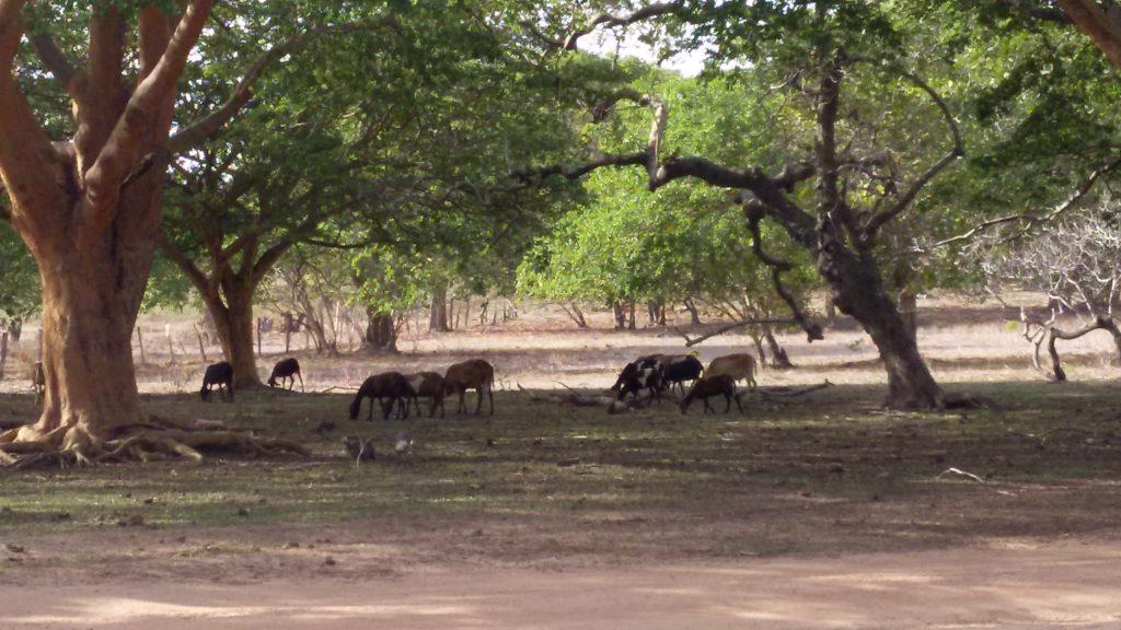 Fazenda São Francisco do Anzol de família que reclama posse de terra (Arquivo pessoal de Ana Pereira de Melo)