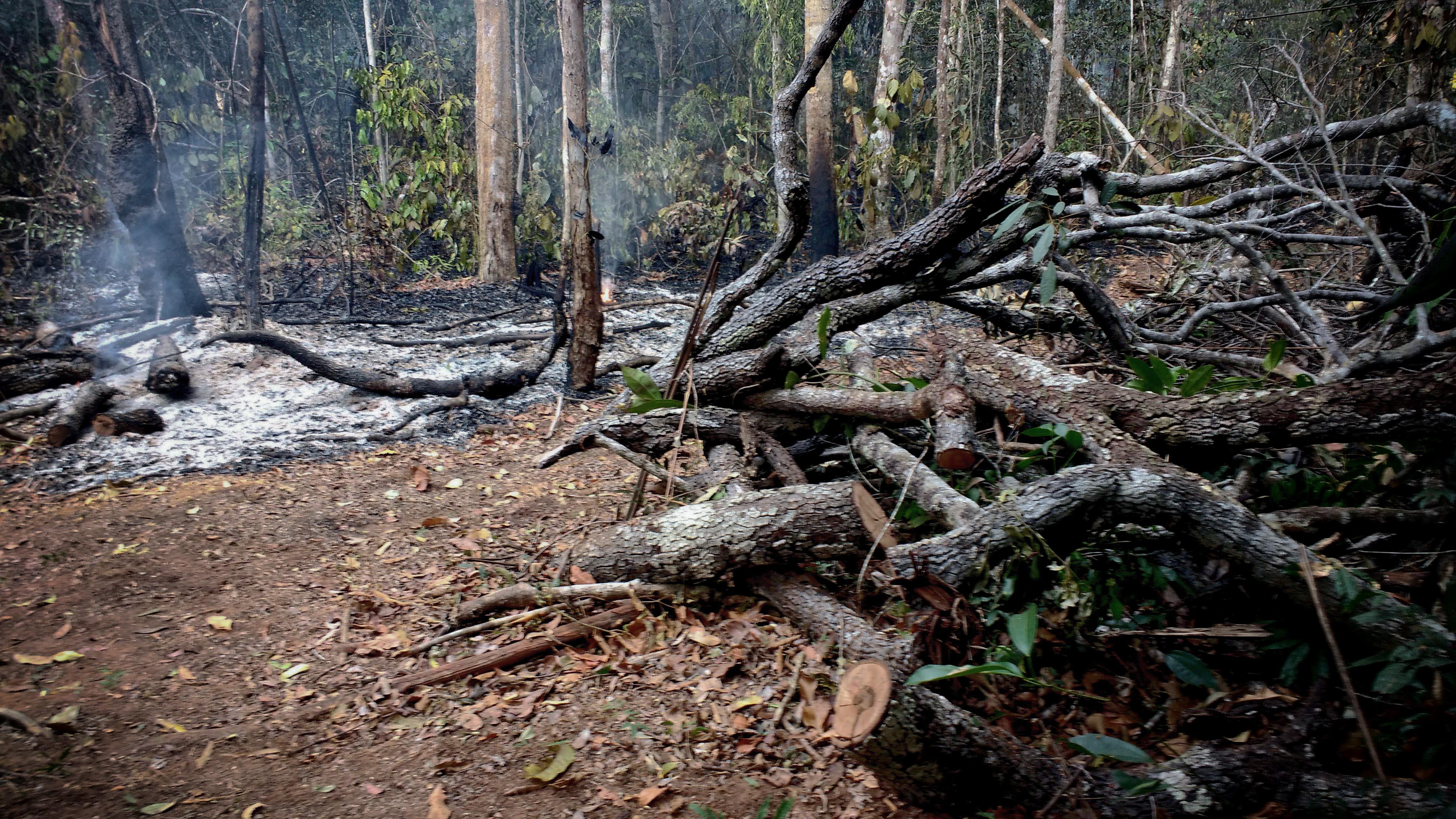 Degradação florestal em Mato Grosso (Foto: Fábio Pontes/Amazônia Real)