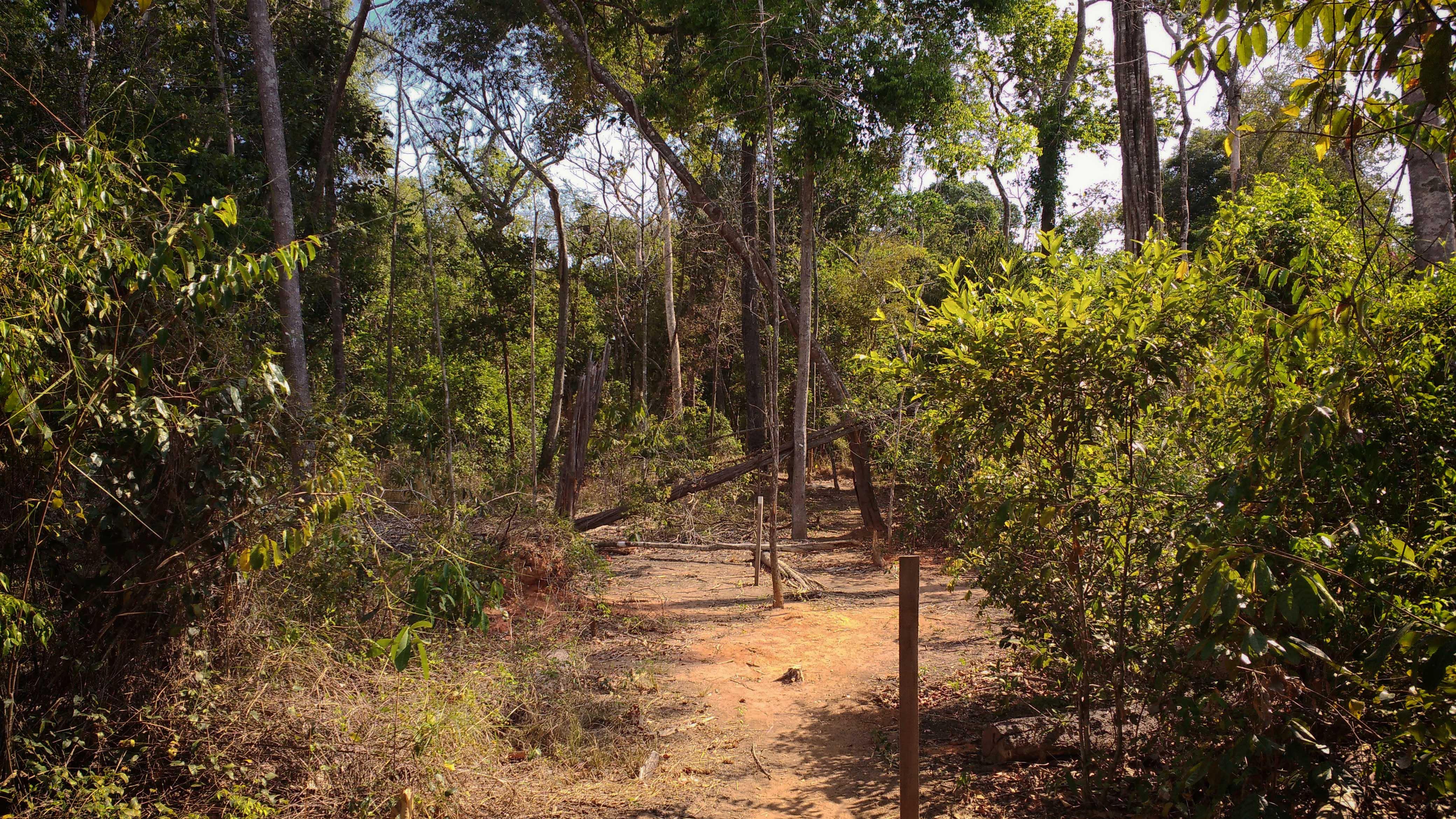 Degradação florestal (Foto: Fábio Pontes/Amazônia Real)