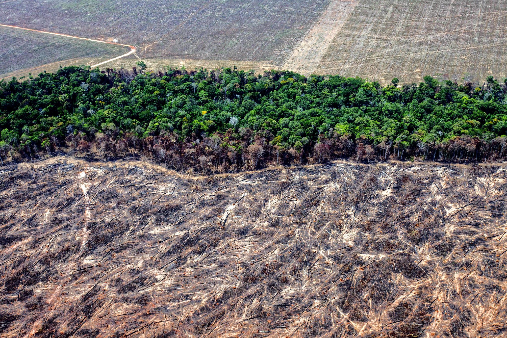 Amazônia e o Aquecimento Global: 10 – Mitigação