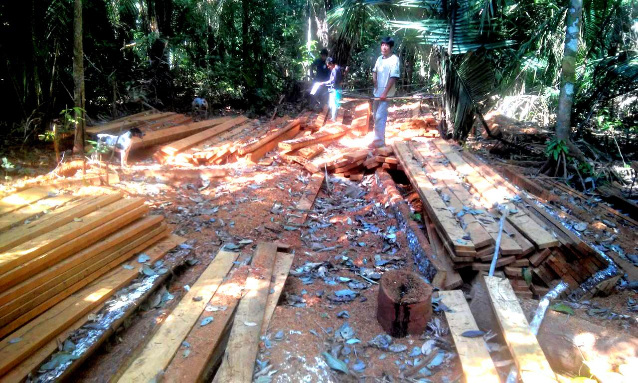 PF desmonta esquema de grilagem que causou prejuízo ambiental de R$ 22 mi na terra dos índios Uru-Eu-Wau-Wau