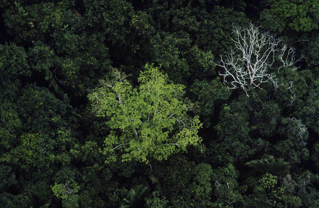 Floresta Amazônica (Foto: George Love/ONU)