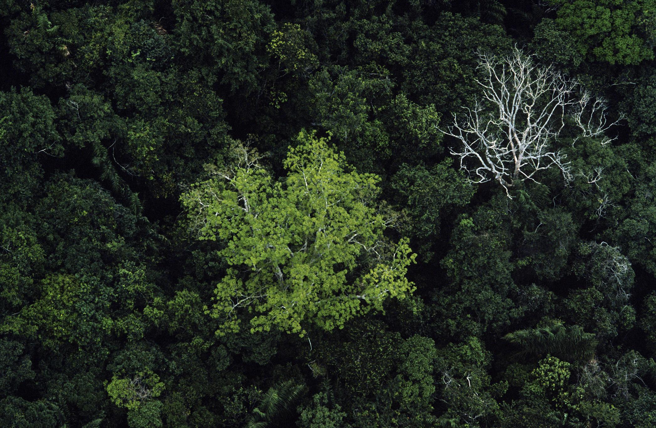 Sustentabilidade da agricultura na Amazônia – 7: Biodiversidade como Alternativa para áreas florestais