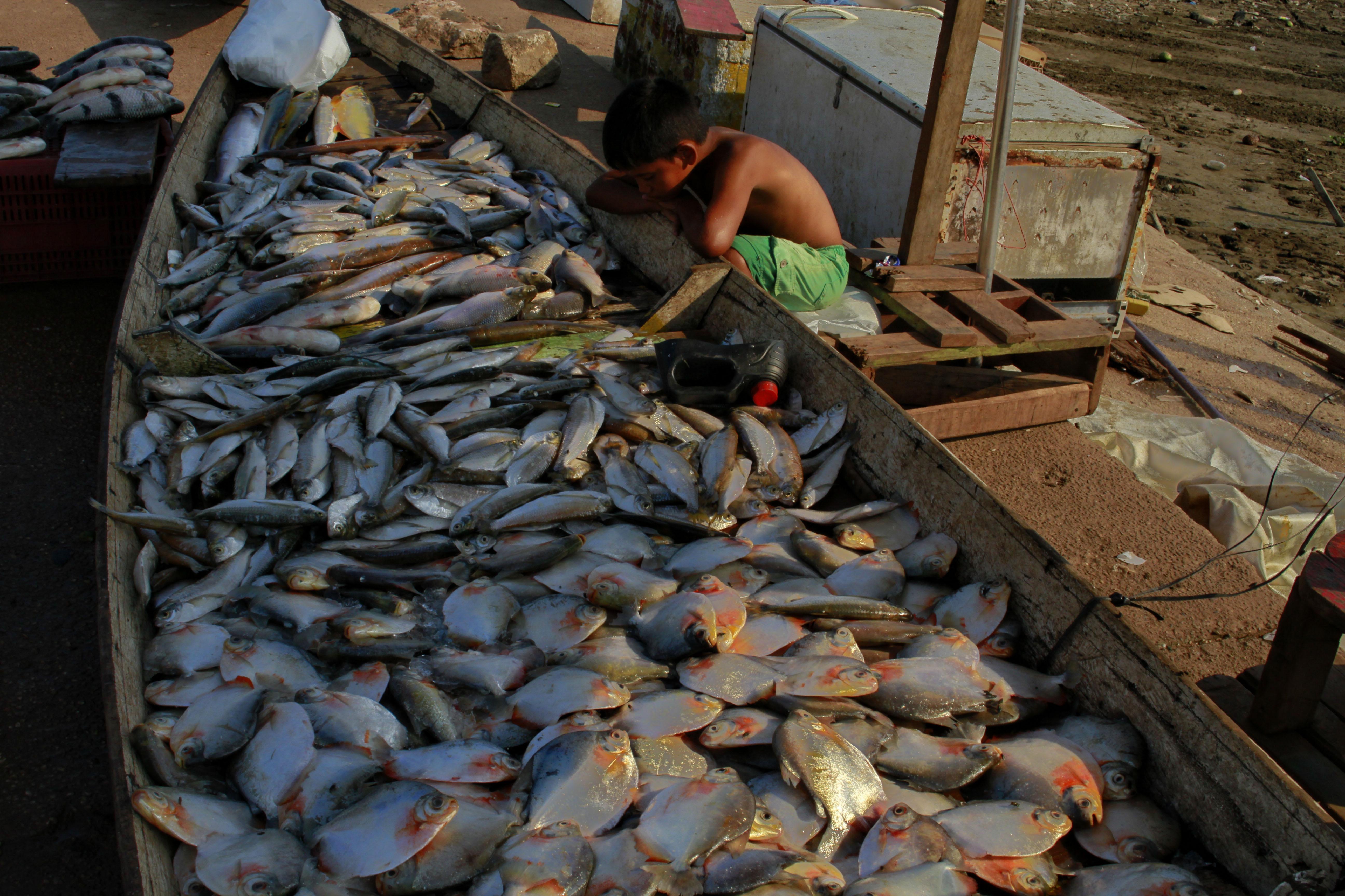 Sobre as caçadas Sateré-Mawé – Parte 3: Alimentação