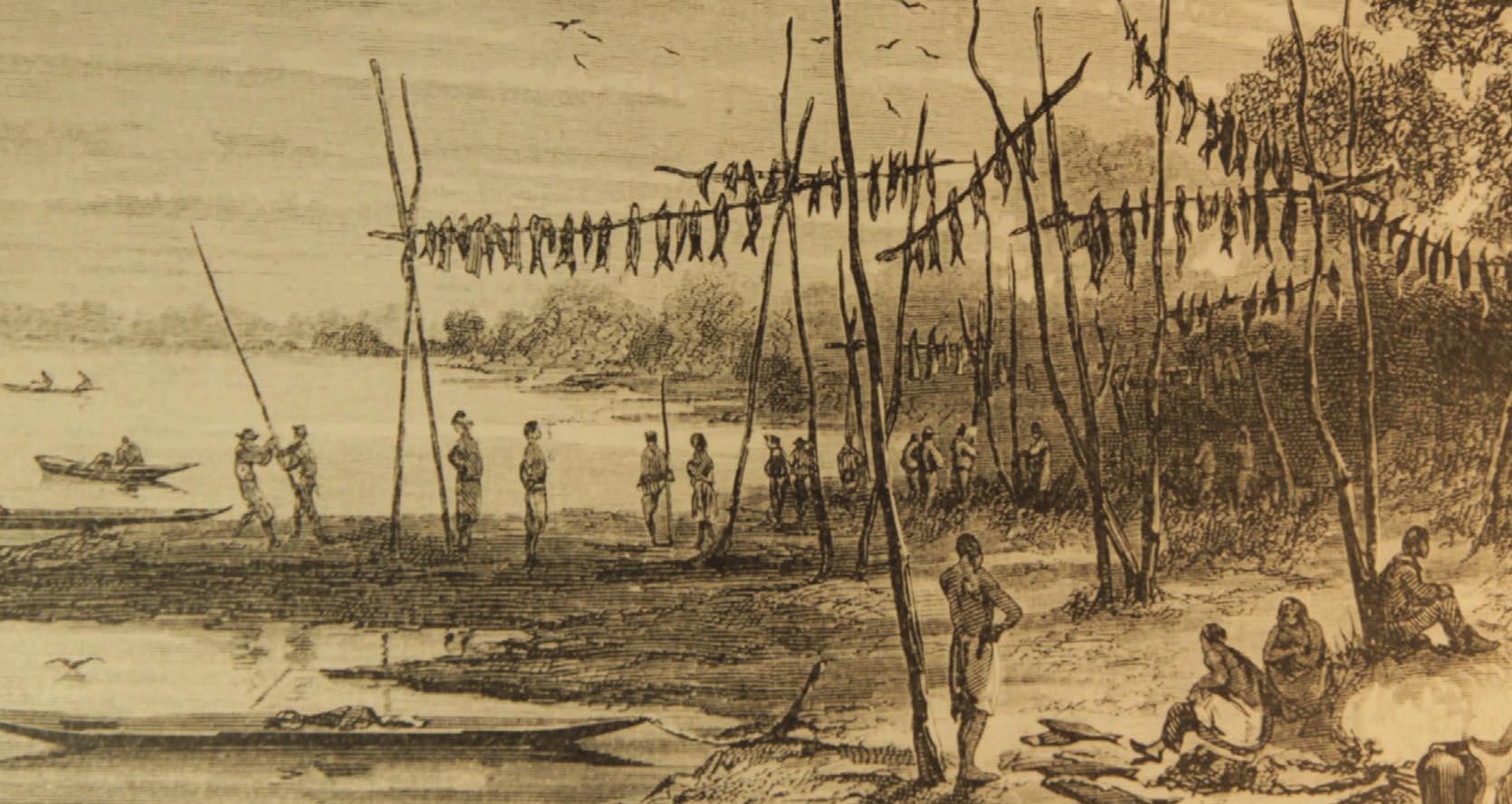 Delenda Amazônia