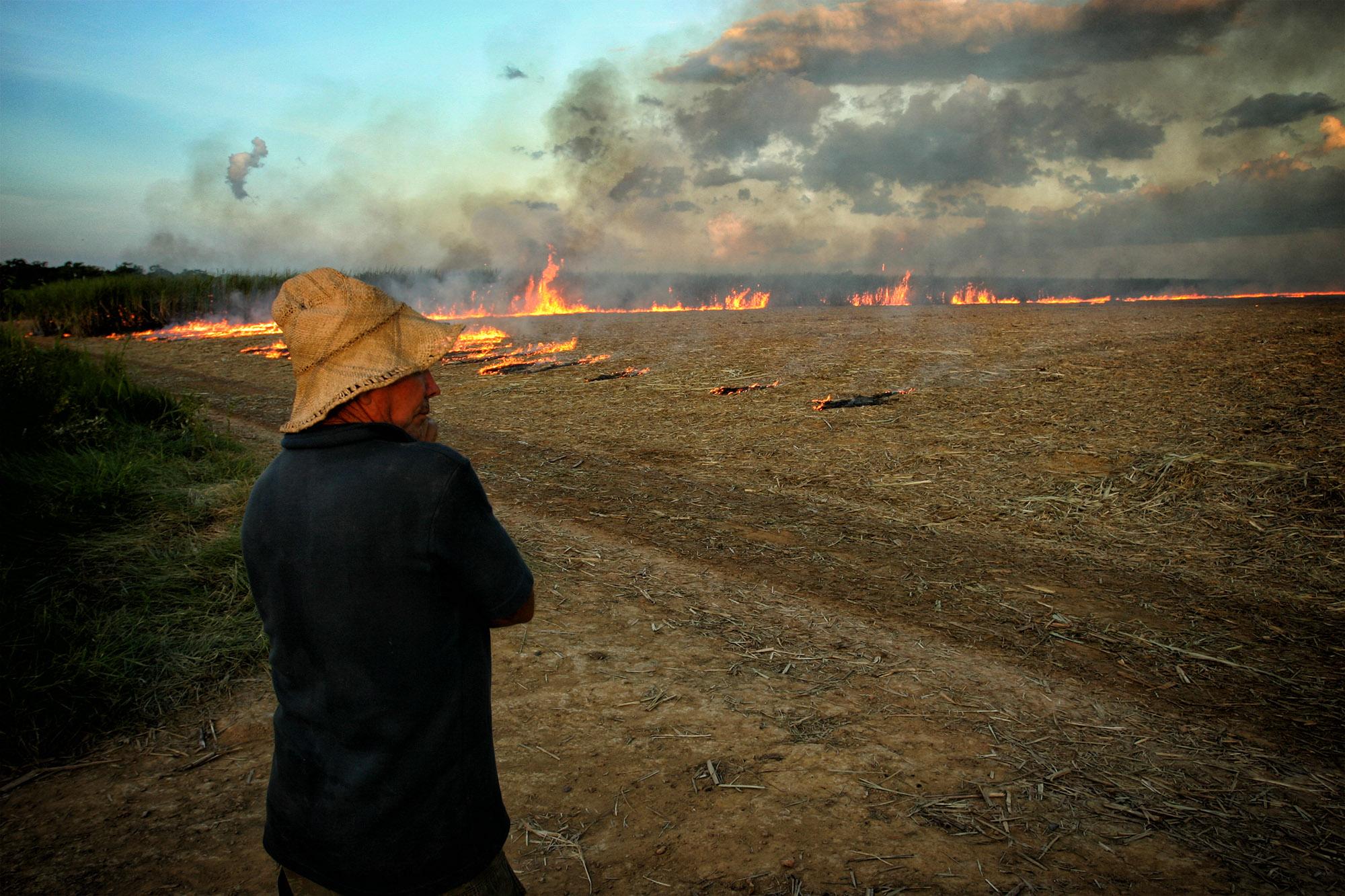 Cana-de-Açúcar da Amazônia: Uma Ameaça à Floresta