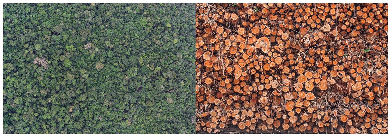 O desmatamento da paisagem amazônica nas fotos de Rogério Assis