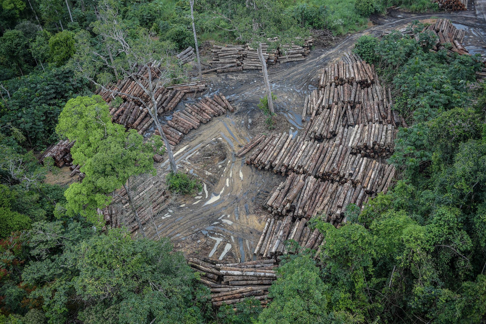 PF prende servidores públicos e madeireiros por fraude e desmatamento na Amazônia