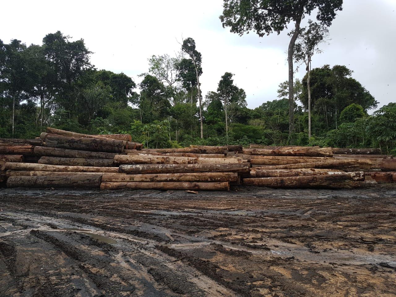 Funai denuncia que madeira apreendida na Terra Indígena Pirititi é alvo de furto, em Roraima
