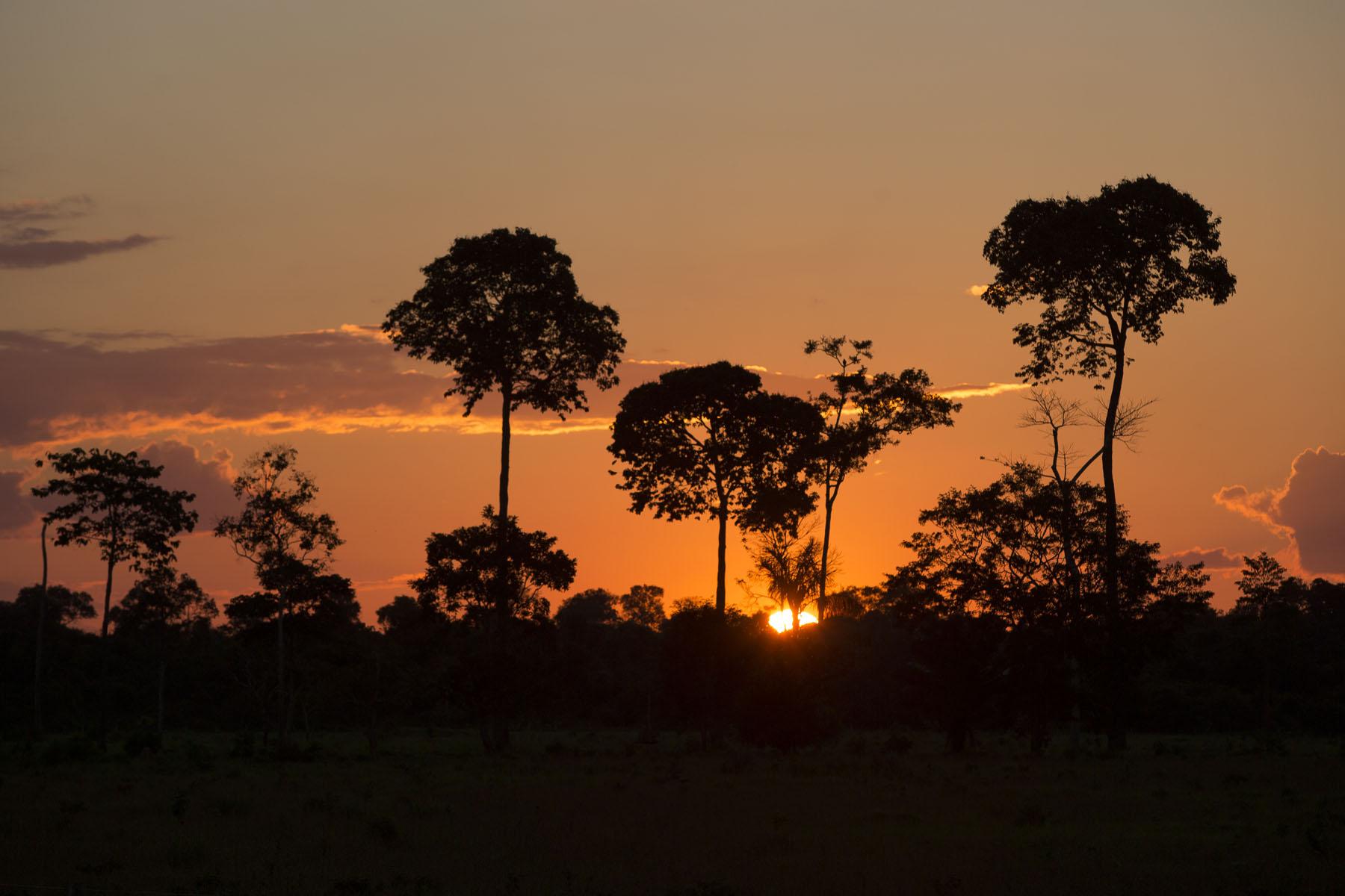 Sustentabilidade da agricultura na Amazônia – 10: Extrativismo como alternativa para áreas florestais