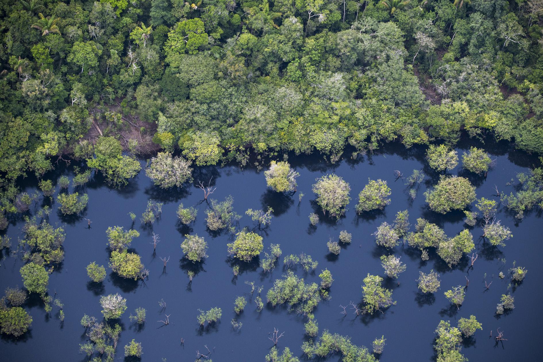 A floresta: ameaçada