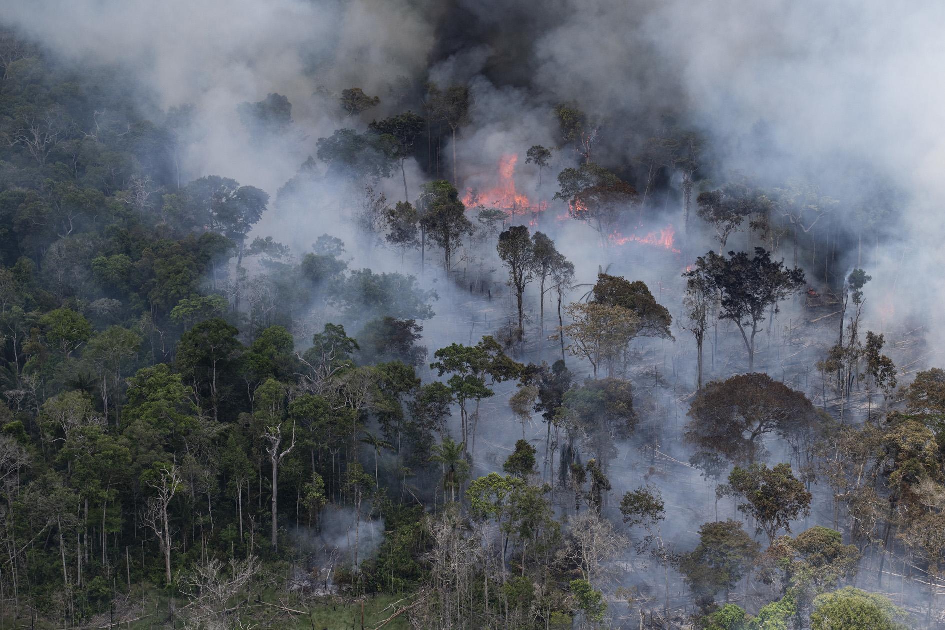 Amazônia e o Aquecimento Global: 14 – Conclusão