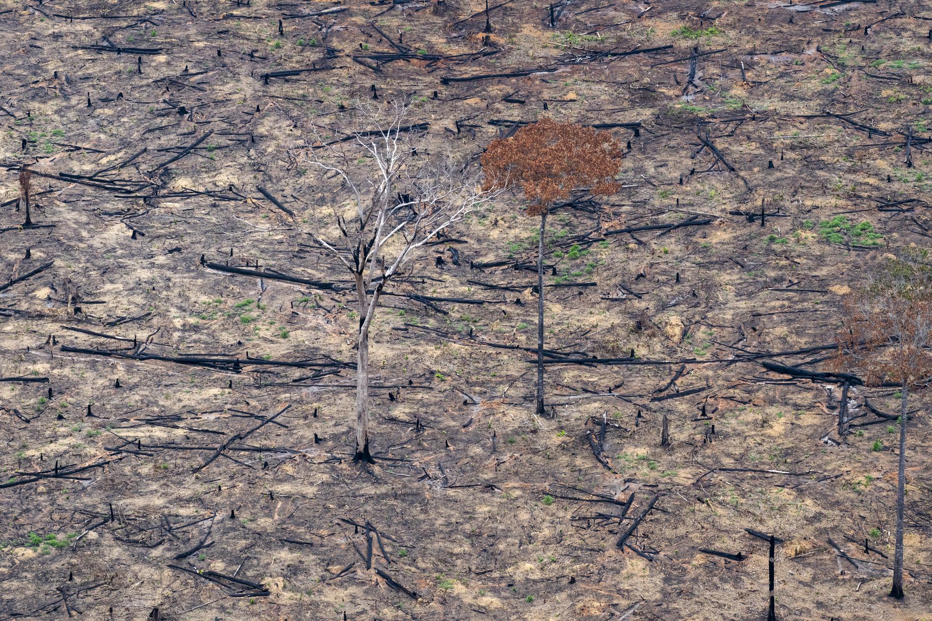 Amazônia e o Aquecimento Global: 7 – A Modelagem Está Correta?