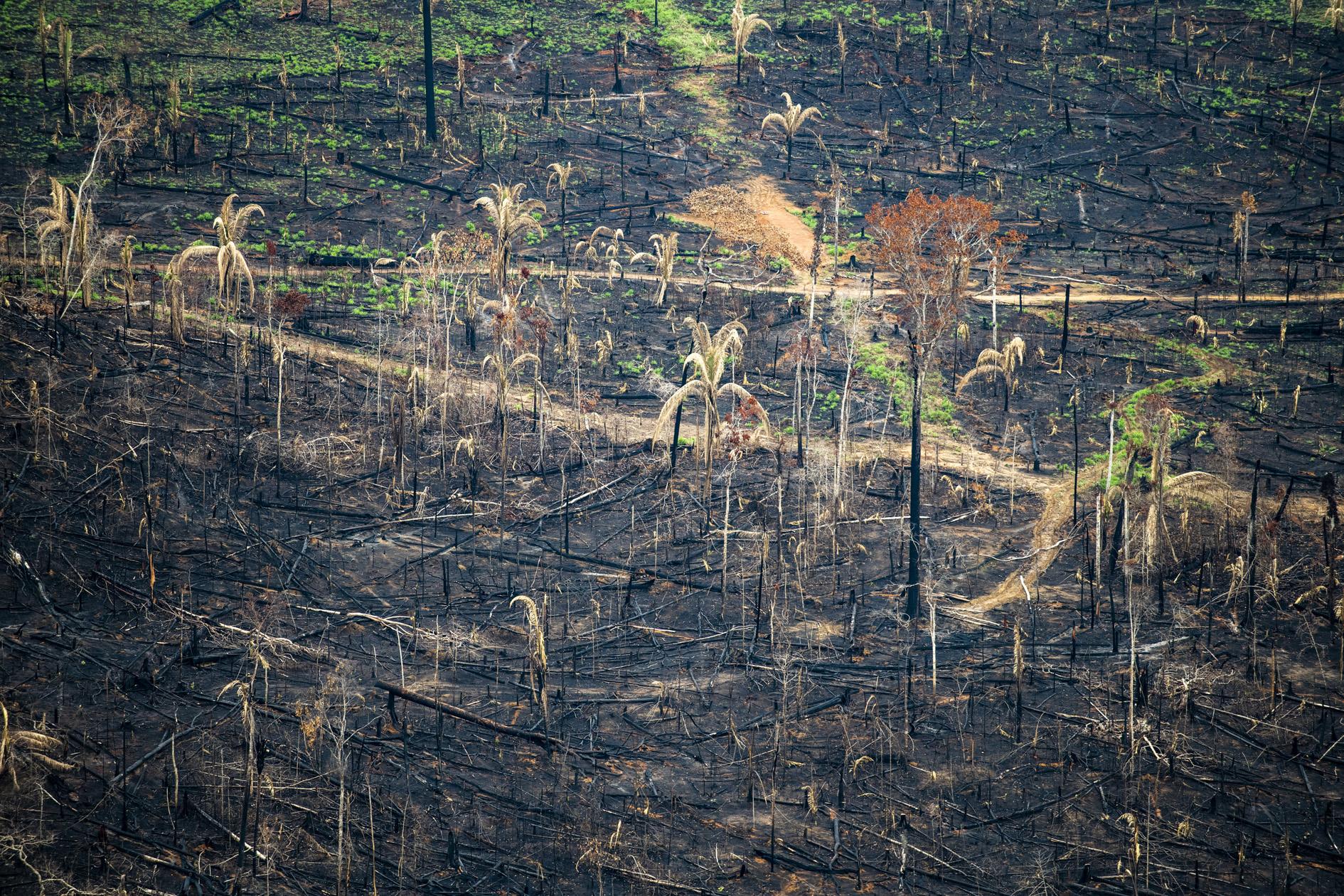 """Amazônia e o Aquecimento Global: 11 –""""Pontos de desequilíbrio"""" para floresta amazônica"""
