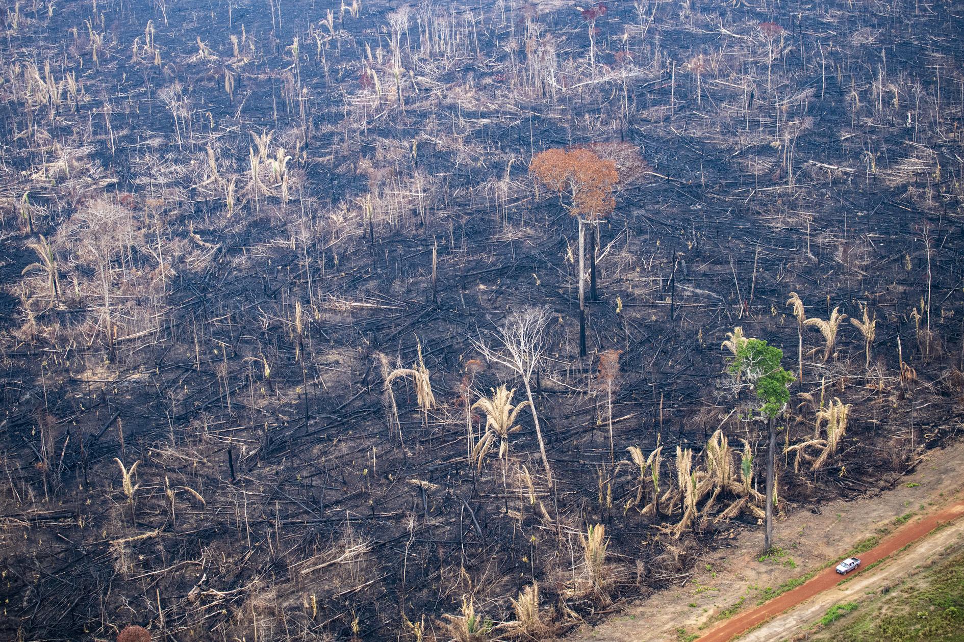"""Os novos números de desmatamento confirmam o """"Efeito Bolsonaro"""", apesar das negações"""