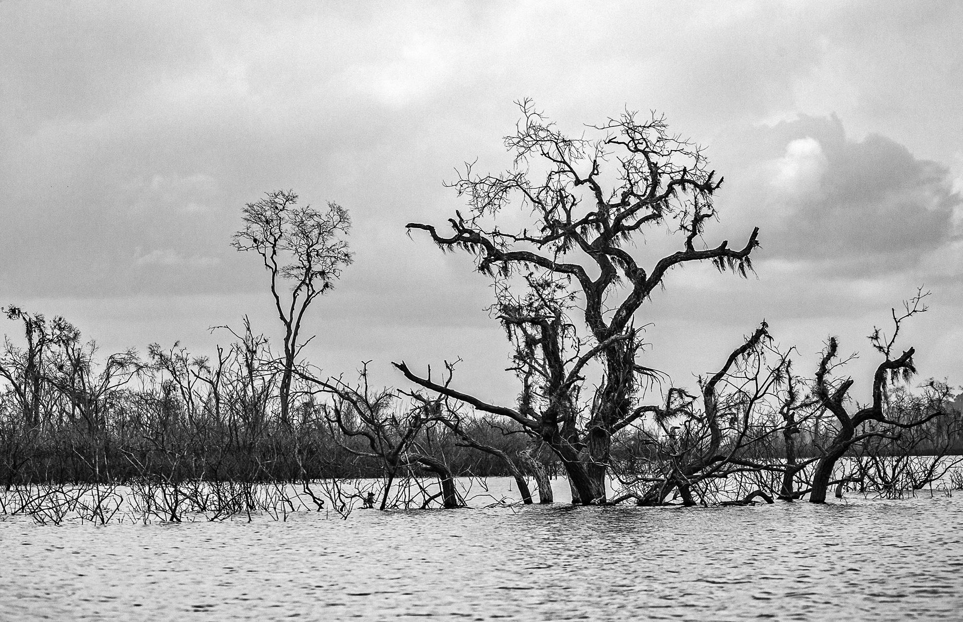 A barragem de Belo Monte: Maquiagem verde contestada