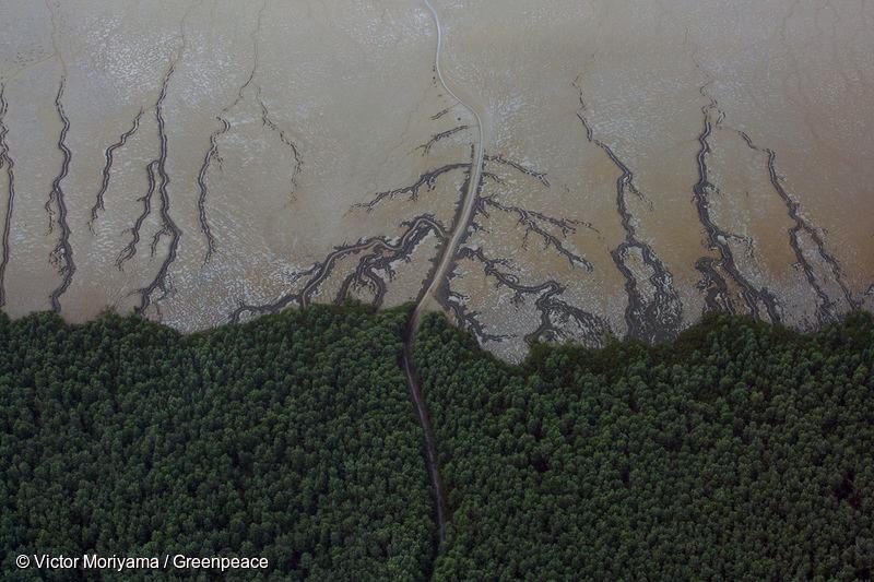 Amazônia e o Aquecimento Global: 12 – Floresta amazônica virando Caatinga!