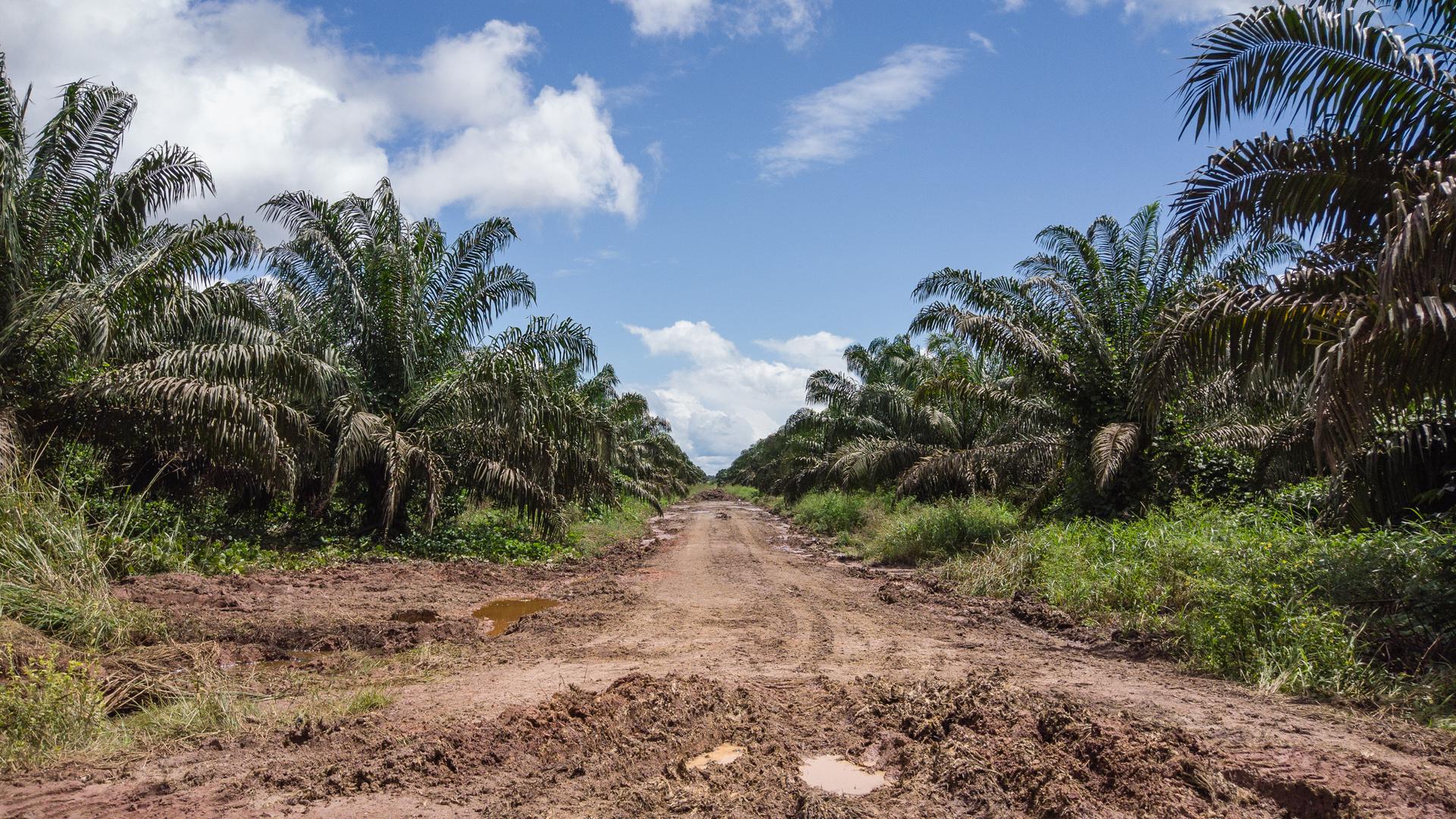 Os planos de biocombustíveis do Brasil impulsionam o desmatamento