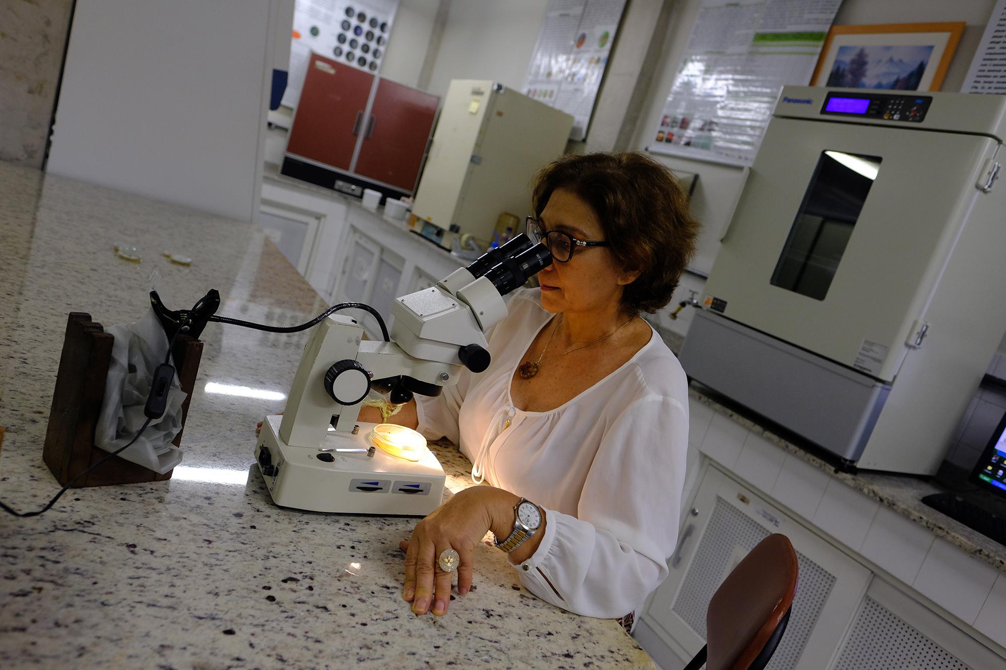 Pesquisas sobre os fungos são temas de congresso em Manaus