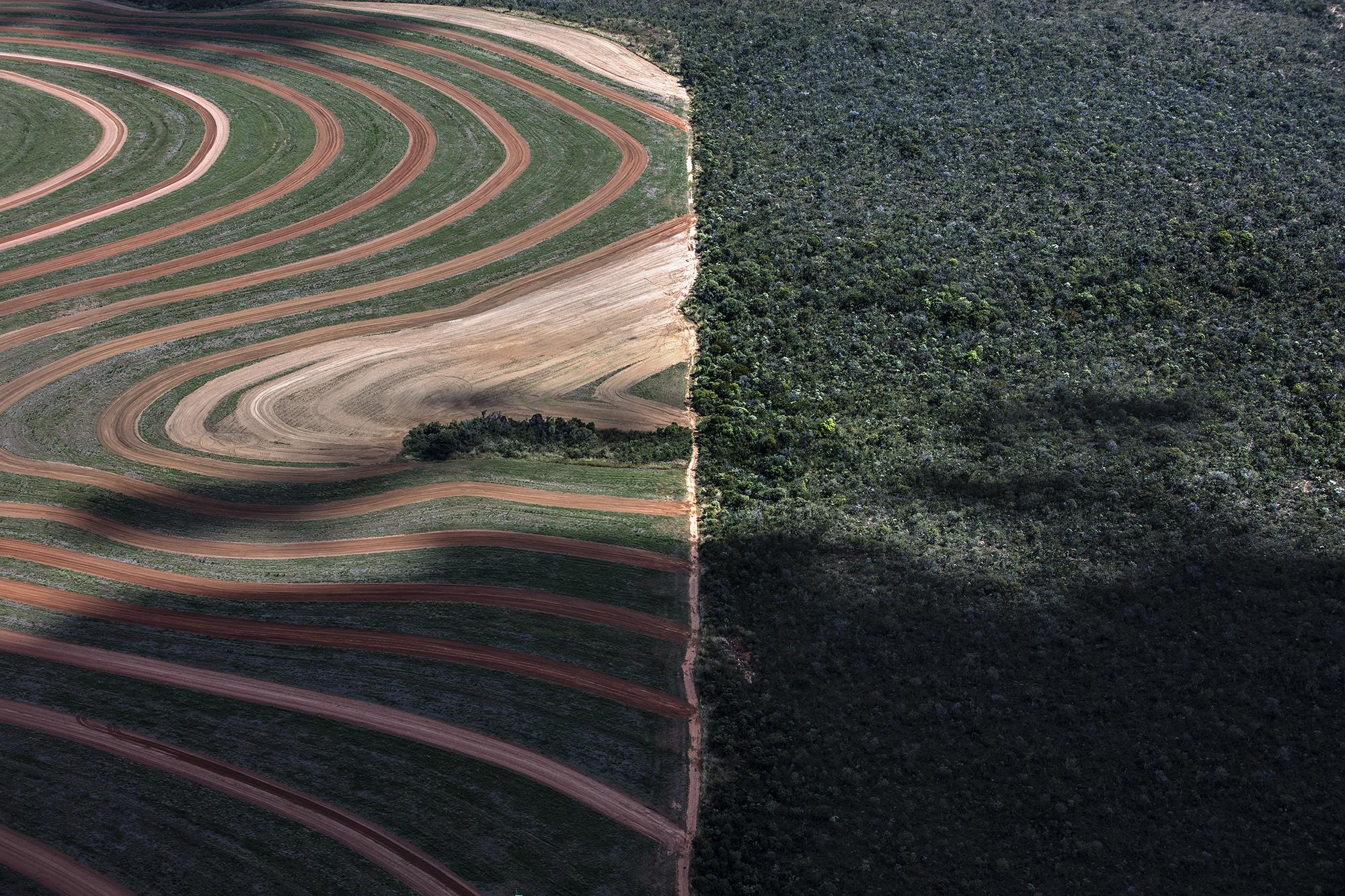 Os números do desmatamento são reais apesar da negação do presidente Bolsonaro