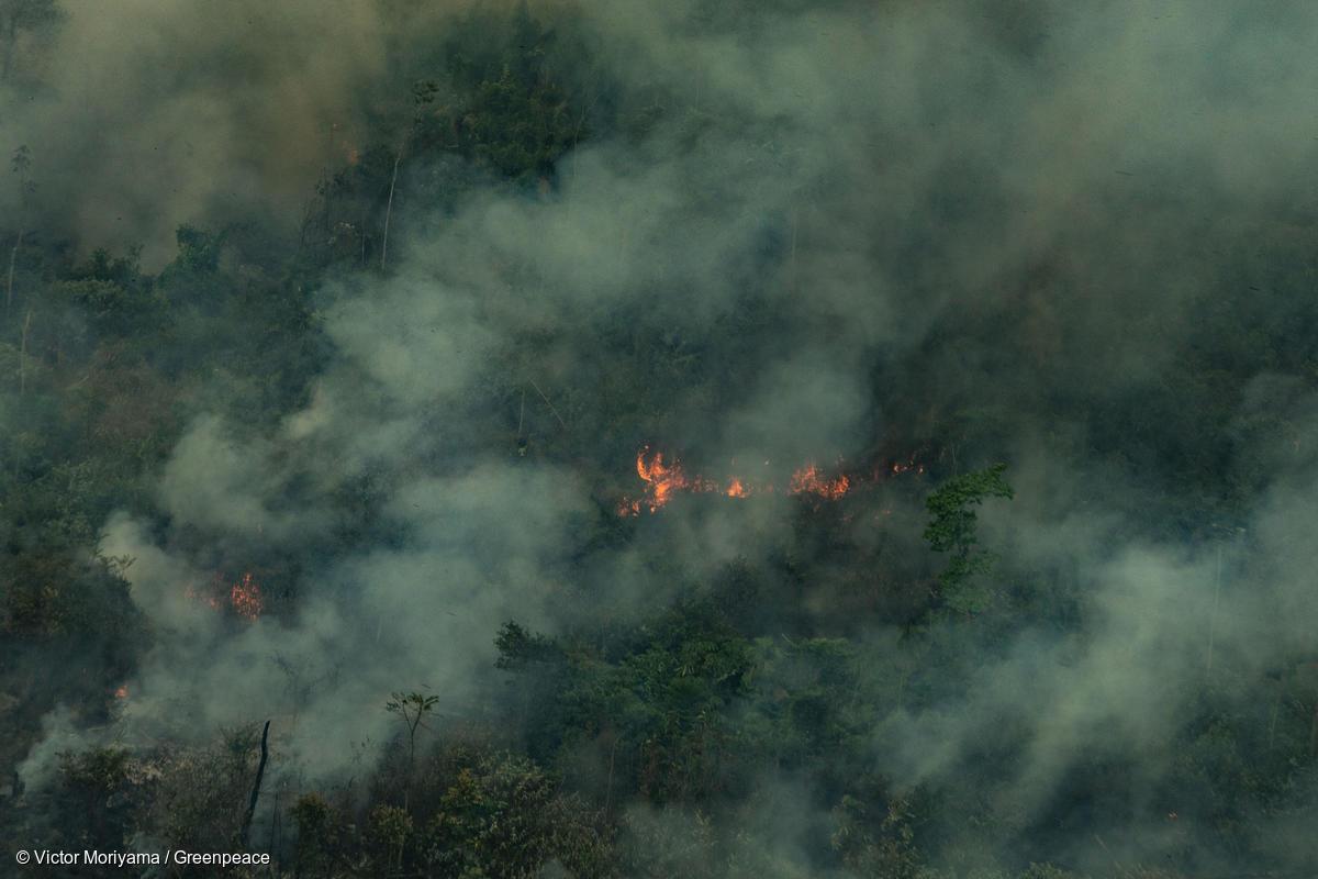 """Amazônia em Chamas: Ibama pediu apoio à Força Nacional para deter o """"dia do fogo"""", mas Moro não atendeu"""