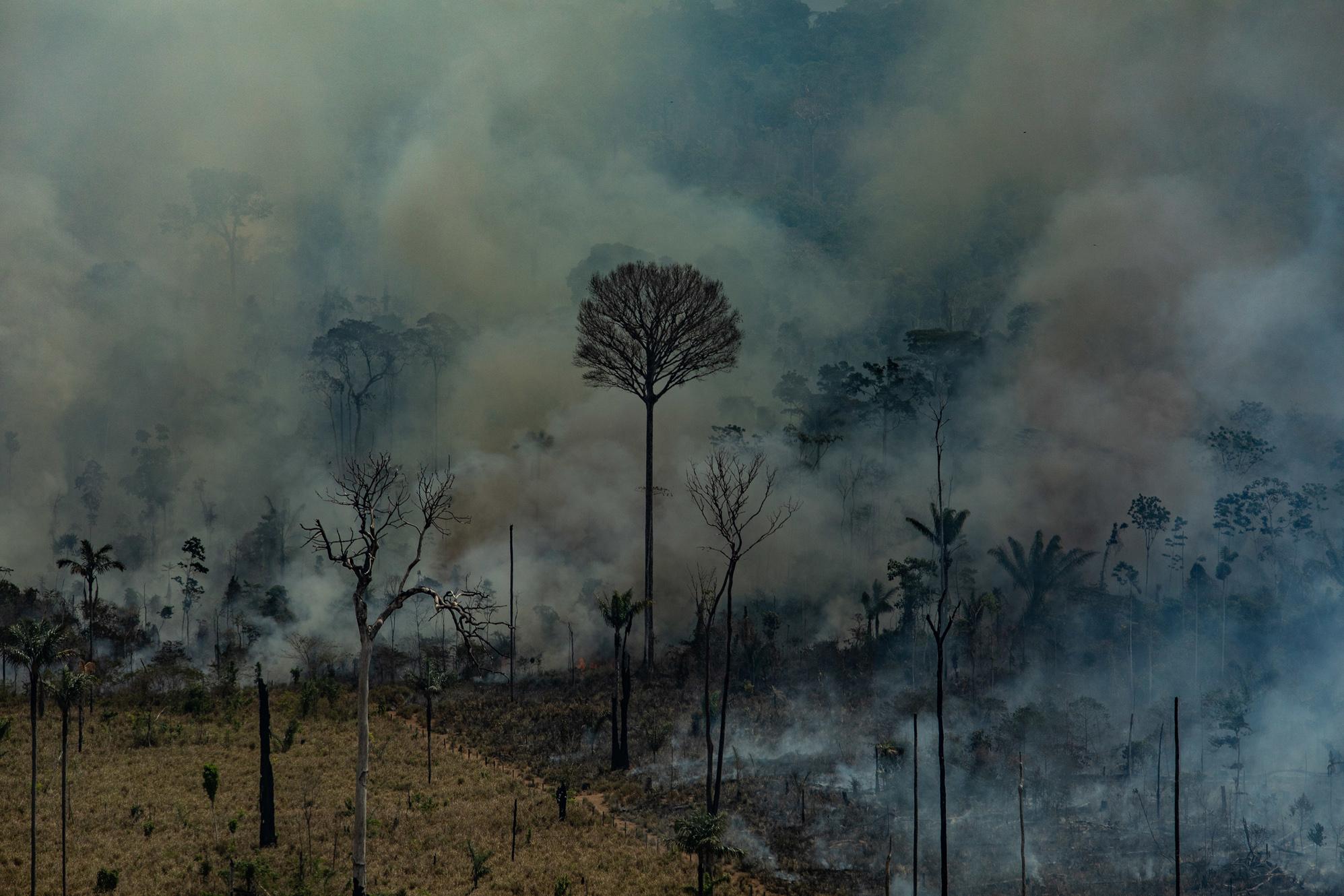 """Para chefe de fiscalização do Ibama, envolvidos no """"dia do fogo"""" se uniram para queimar a floresta"""