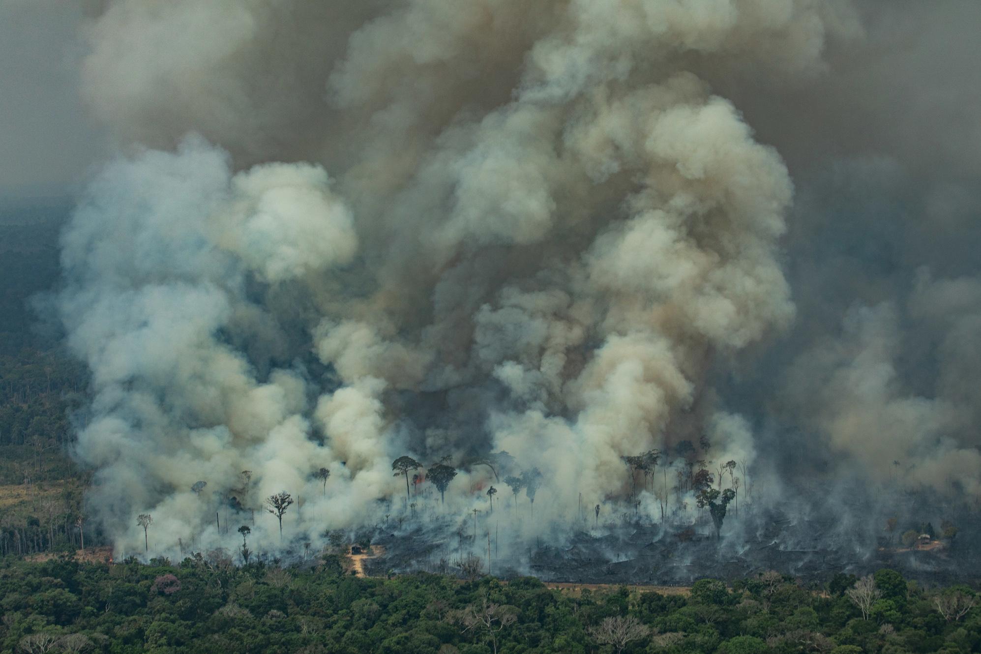Amazônia em Chamas: o fogo apocalíptico de Rondônia