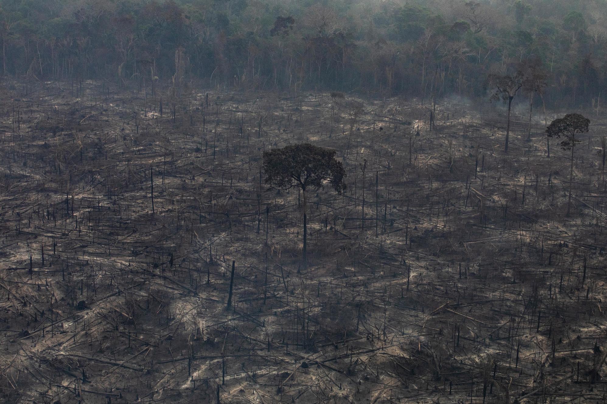 Queimadas e pandemia projetam cenário de 'desastre' na Amazônia, diz Ipam