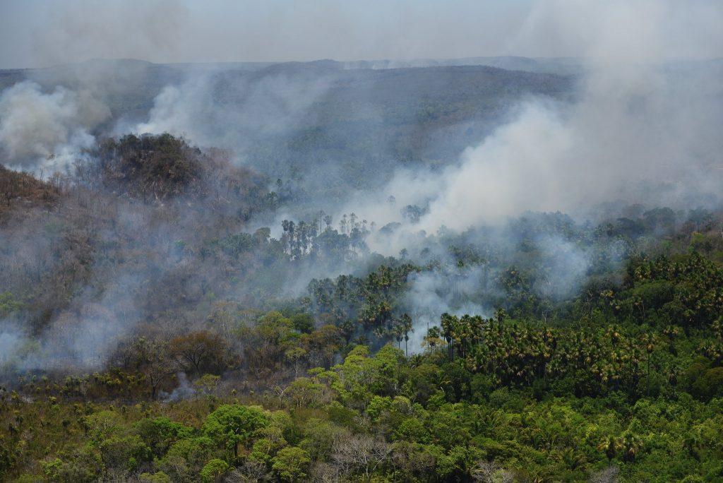 O atributo alt desta imagem está vazio. O nome do arquivo é TI-Porquinhos-Maranhão-Foto-Felipe-Werneck-Ibama2017--1024x684.jpg