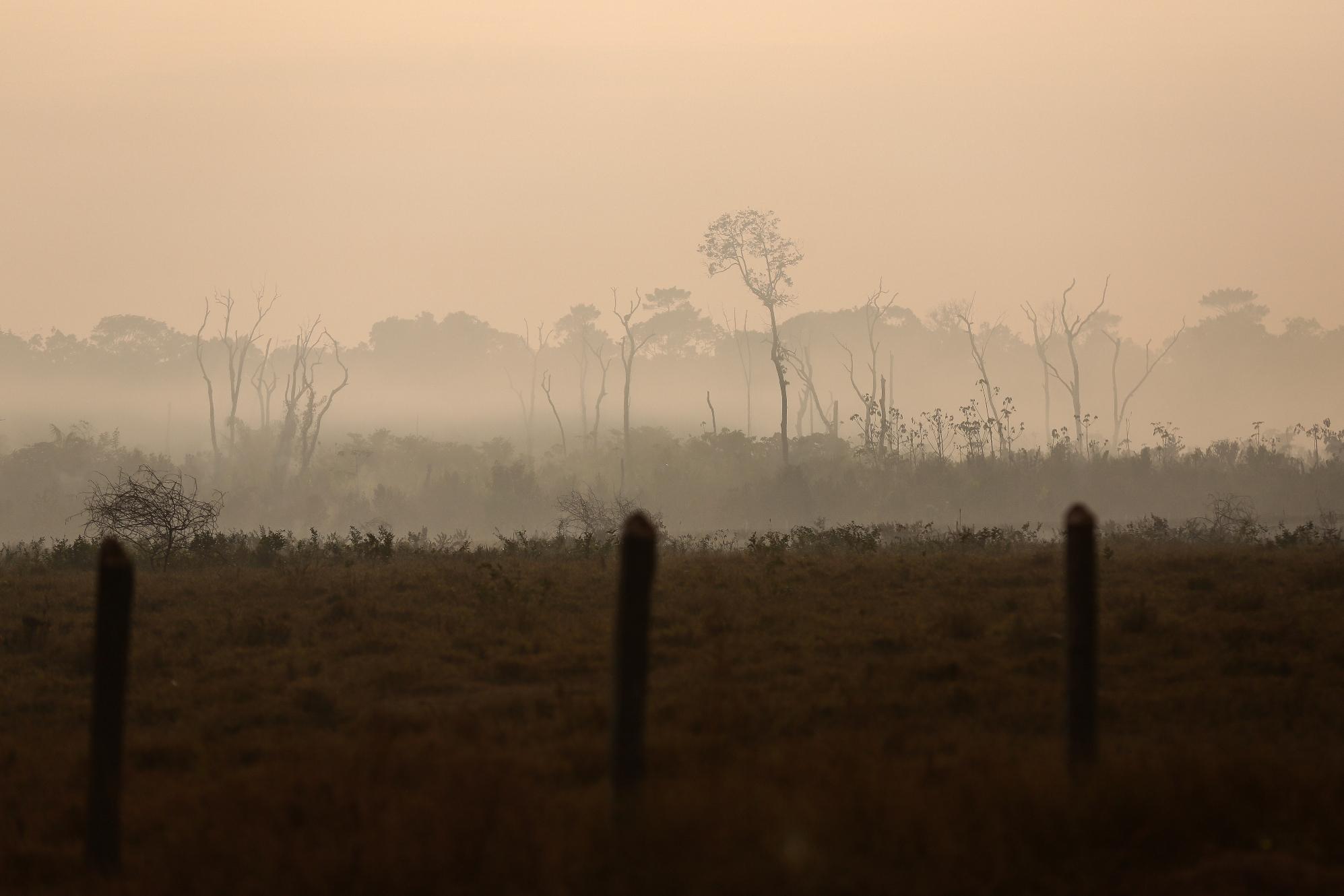 Sustentabilidade da agricultura na Amazônia – 12: Serviços ambientais como prioridade