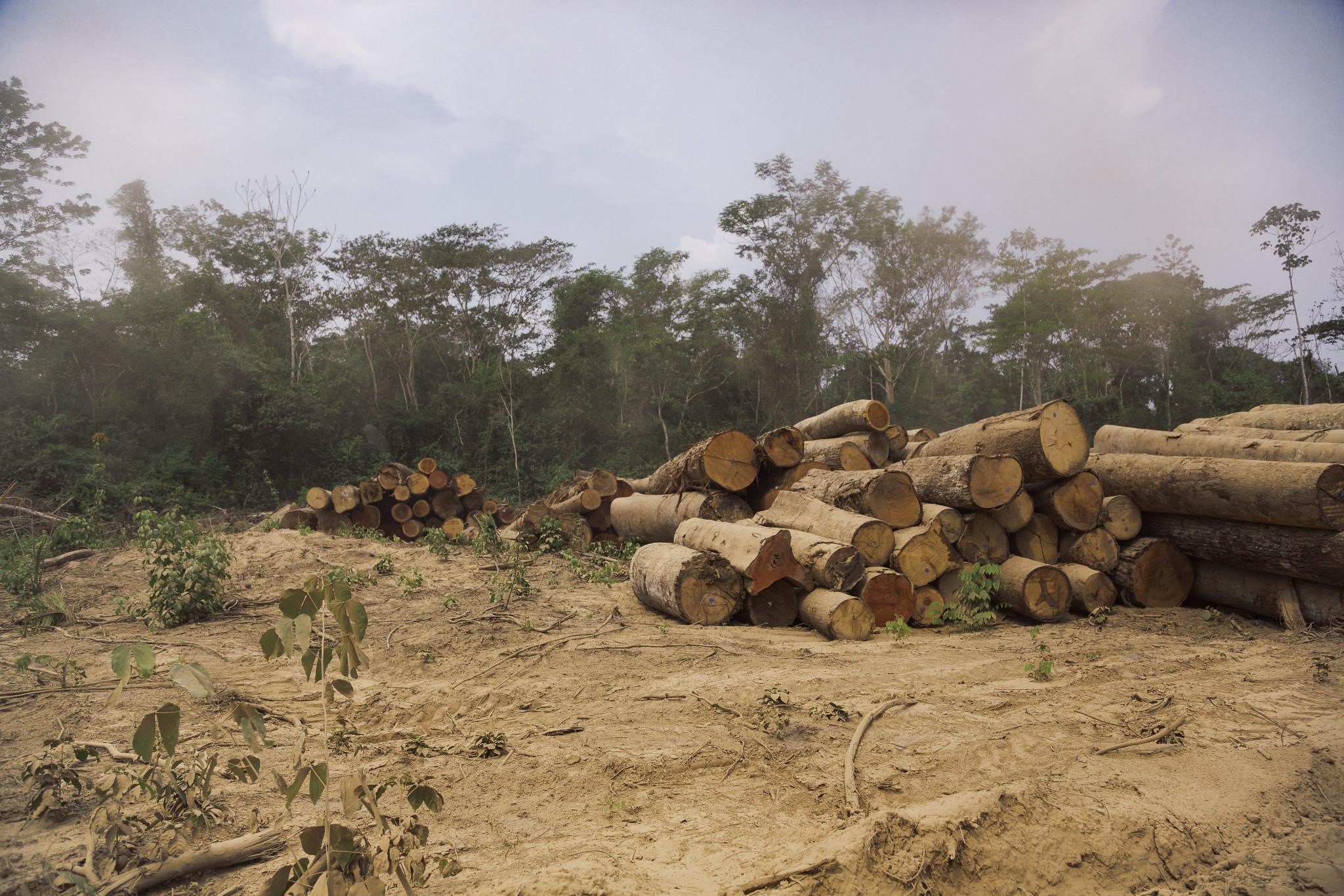 Sustentabilidade da agricultura na Amazônia – 9: Armazenamento de carbono como alternativa para áreas florestais