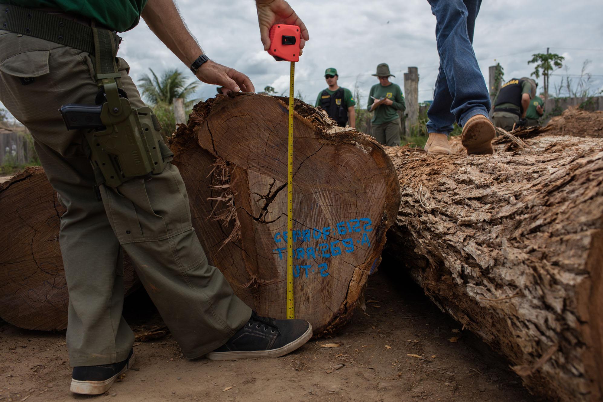 Sustentabilidade da agricultura na Amazônia – 11: Manejo florestal como alternativa para áreas florestais